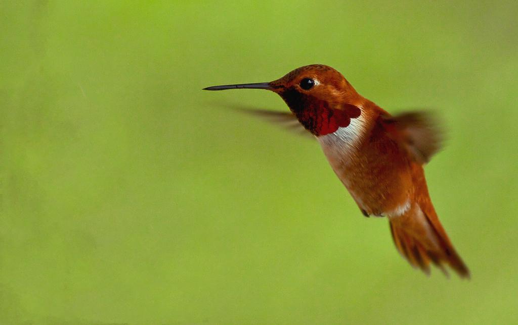 What is Google's Hummingbird Update?