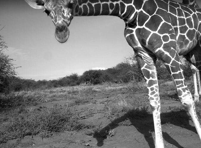 light fun animals11 Hidden Cameras Capture Incredible Photos of Animals in the Wild