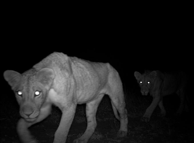 light fun animals31 Hidden Cameras Capture Incredible Photos of Animals in the Wild