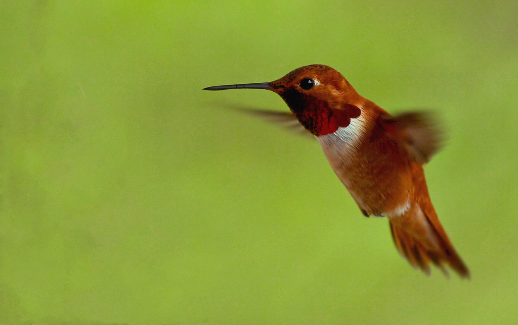 What is Google's Hummingbird Update?